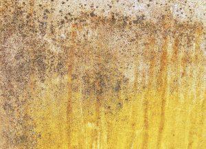 Hagedorn Bautenschutz, Schimmelsanierung
